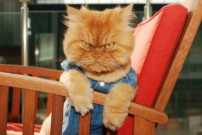 garfi-evil-grumpy-persian-cat-6