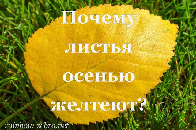 Почему листья осенью желтеют