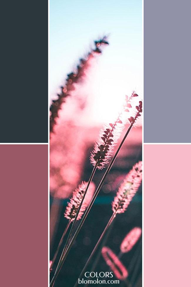 combinacion_variedad_de_color_2