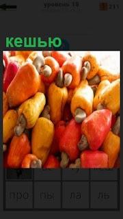 Плоды дерева с кешью созревшие и положены в качестве урожая