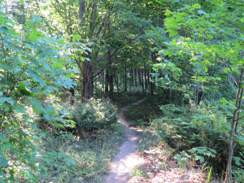 Camp Arcadia trail