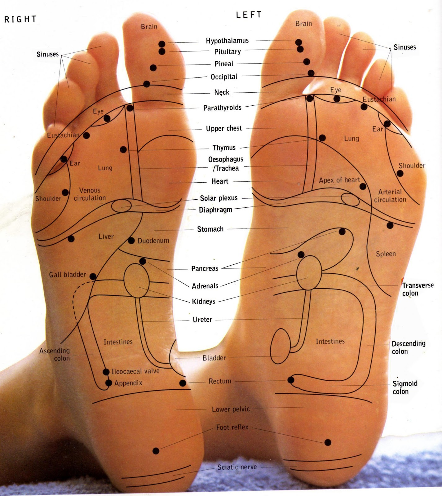 Massage, Aromatherapy & Reflexology In