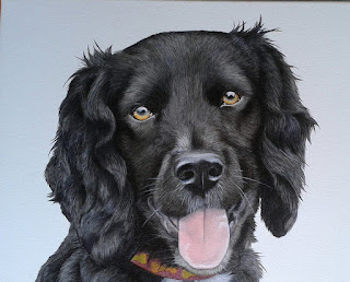 Spaniel Pet Portrait Oil on Canvas