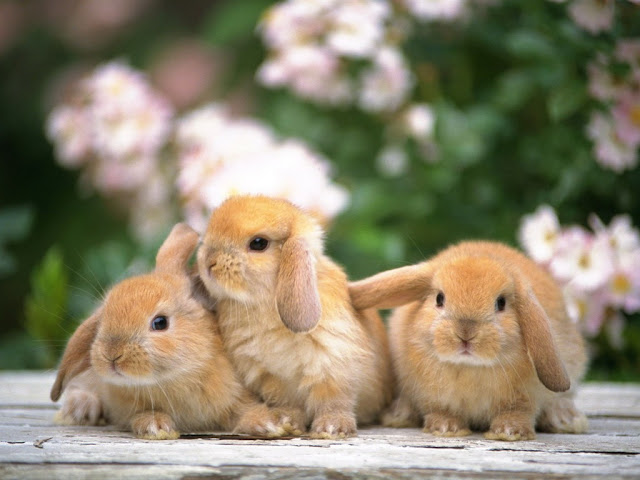 Three bunny in the garden