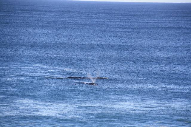 Logans Beach Whale Nursery