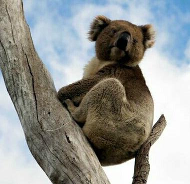 Australia Vacation Guide