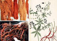 Kök boyası bitkisi, kökleri ve kök boyasıyla kırmızı ve turuncu renge boyanmış iplikler