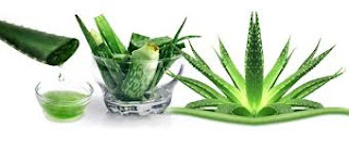 benefits of aloe vera to human body