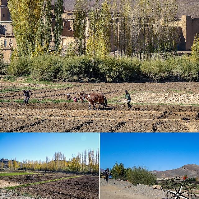 Marroquíes labrando la tierra