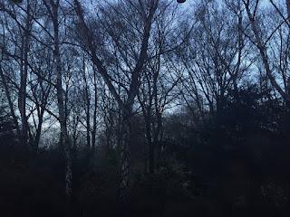 Sonnenuntergang: Es wird dunkel und man kann die Bäume gerade noch so erkennen