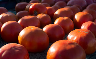 New Slicing Tomatoes Beckon to be Enjoyed. Photo: Reed Petersen
