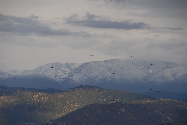 crows flying over snow topped mountain