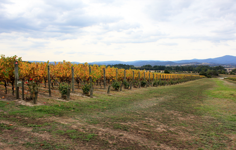 Yarra Valley Wine Tasting