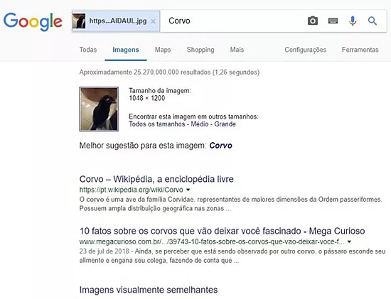 Gato ou corvo - Foto viraliza na internet e confunde até o Google - Img 2