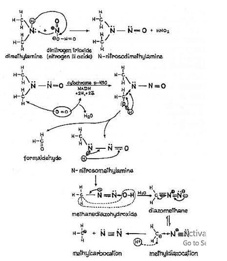 BIODEGRADATION OF N-NITROSO AMINES