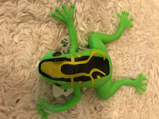 Stretchy Squishy Frog
