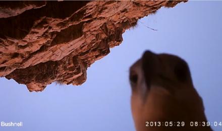 Seekor Elang bahari mencuri kamera pengawas buaya di Australia Seekor Elang bahari mencuri kamera pengawas buaya di Australia