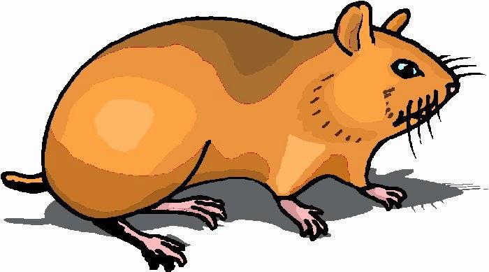 Dibujos Infantiles Para Colorear De Hamsters: Maestra De Primaria: Dibujos De Hámsteres Para Colorear