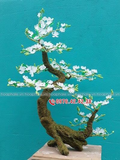 Goc bonsai hoa tuyet mai tai Dang Thuy Tram