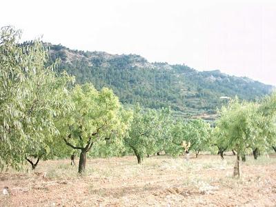 La pileta, camino, pantano de Pena, embalse, finca, almendros, olivos 10
