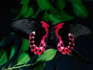 """5//8/"""" pulgadas Mariposa Verde Lima Chartreuse Patrón Cinta 1 yardas ala esperanza de insectos"""