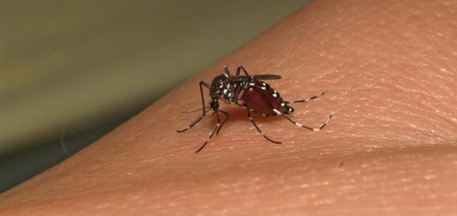 Piauí registra primeiro aumento de casos de dengue do ano
