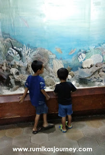 melihat spesimen laut di museum zoologi bogor