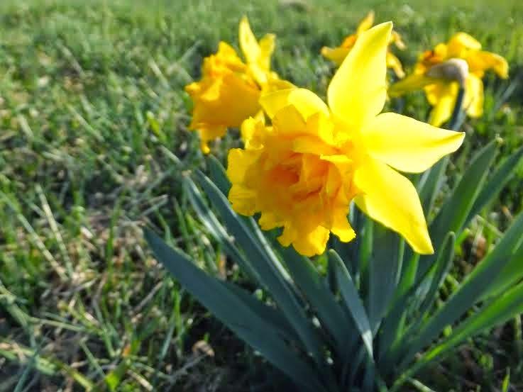 De Flores En La Montana: Un Paraíso En La Montaña Central Leonesa: Flores De Mayo