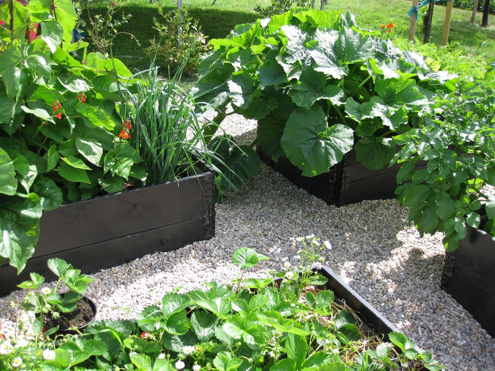Trädgård Grus : Trädgård och design för alla vår köksträdgård