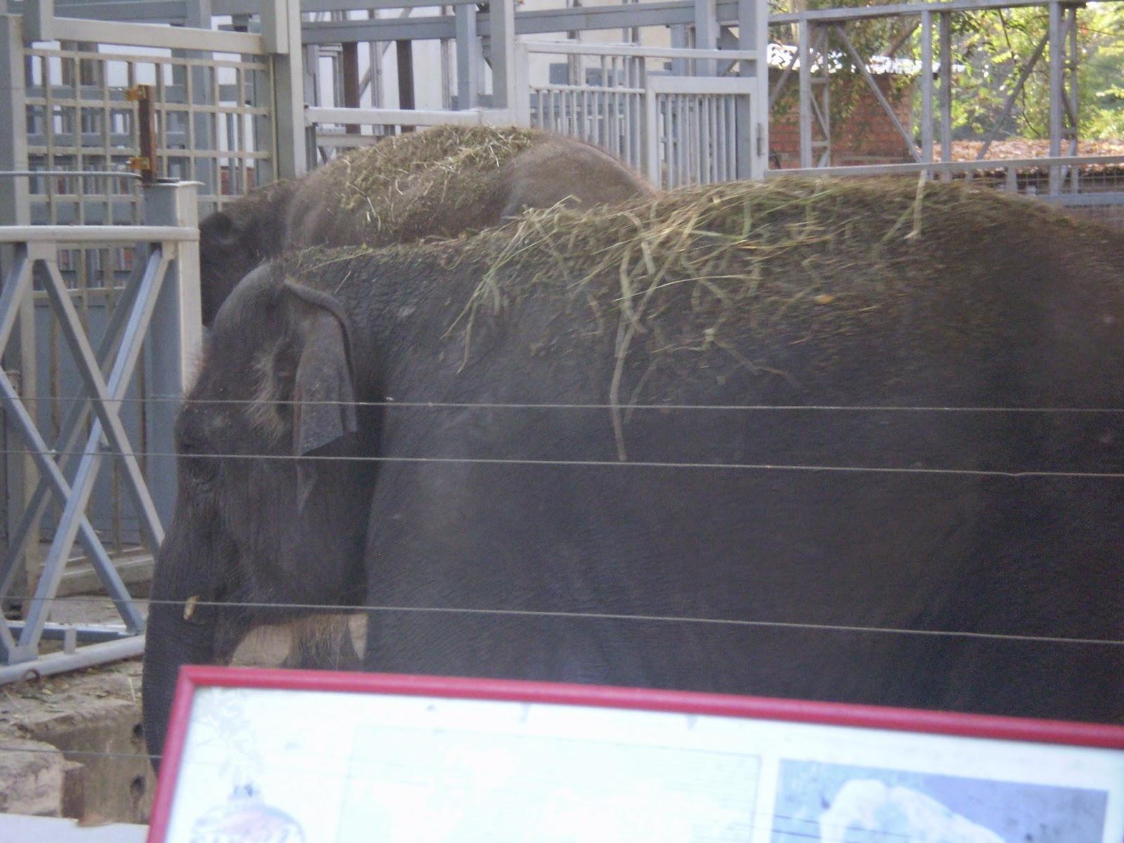 Sloni-v-Rostove