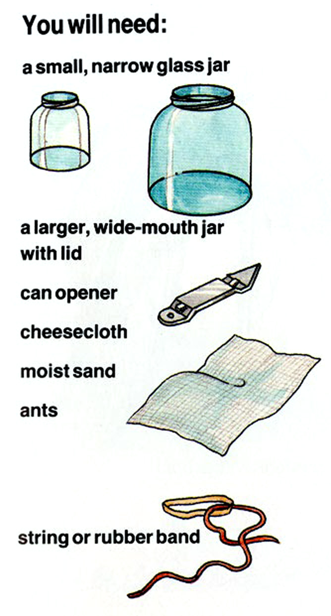 How To Make An Ant Farm for kids? - Arts and crafts for kids