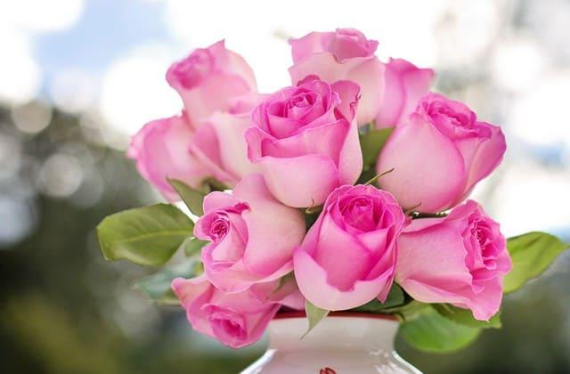 gambar bunga mawar pink yang ada di pot