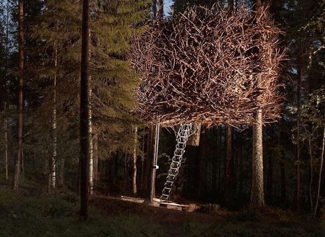 Inilah 10 Desain Rumah Pohon Paling Unik di Dunia