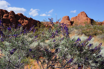 Purple Bush in Red Cliffs National Conservation Area, Utah.