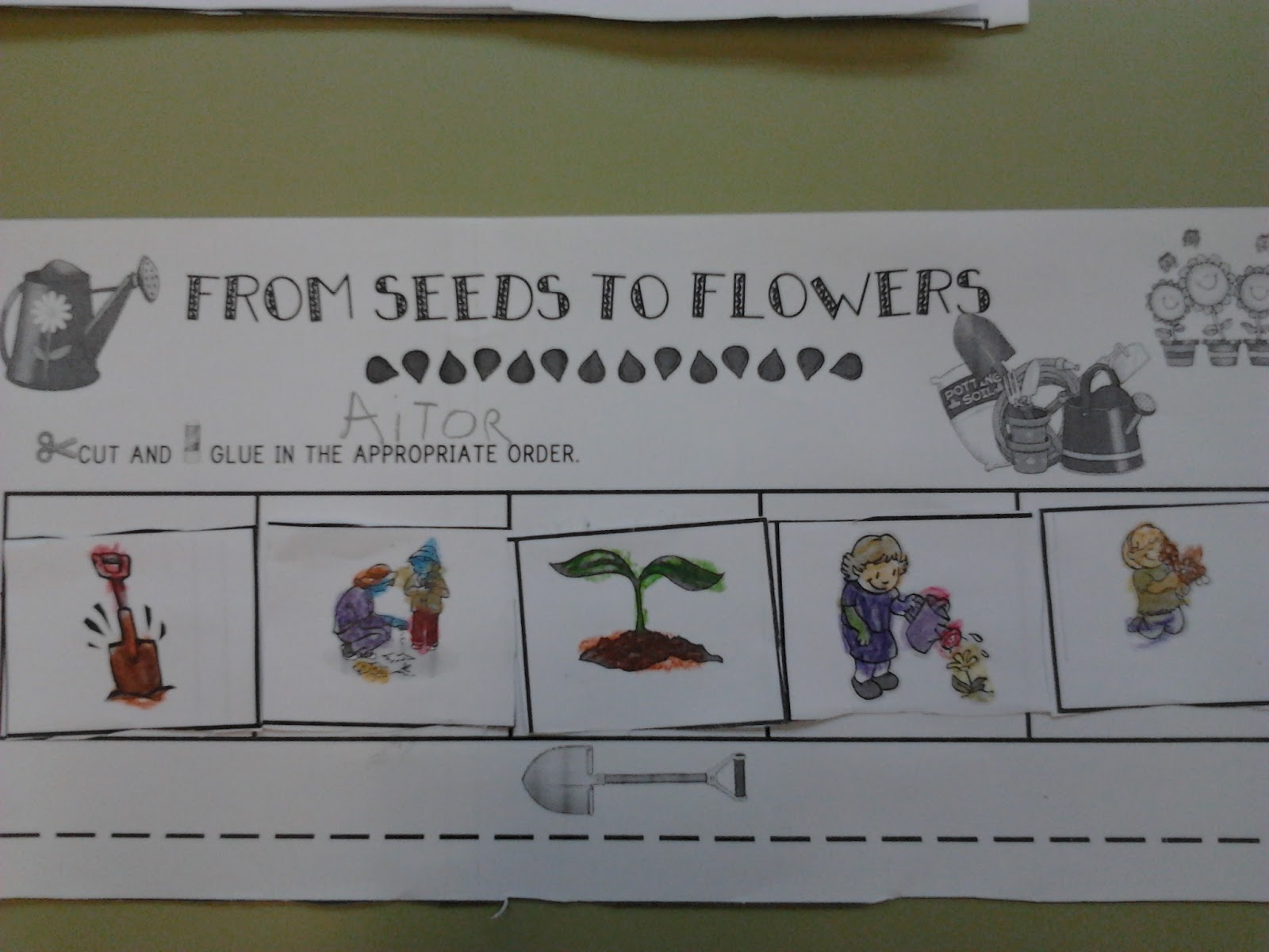 The Teaching Express Parts Of A Flower And Small Groups