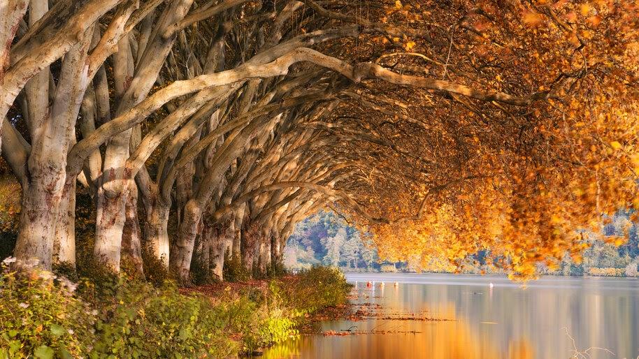 Autumn, Trees, Scenery, 4K, #4.2315