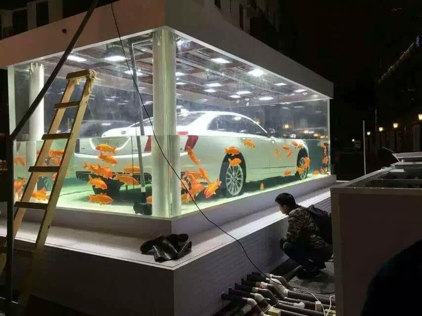 Trưng bày xe hơi trong bể cá khổng lồ