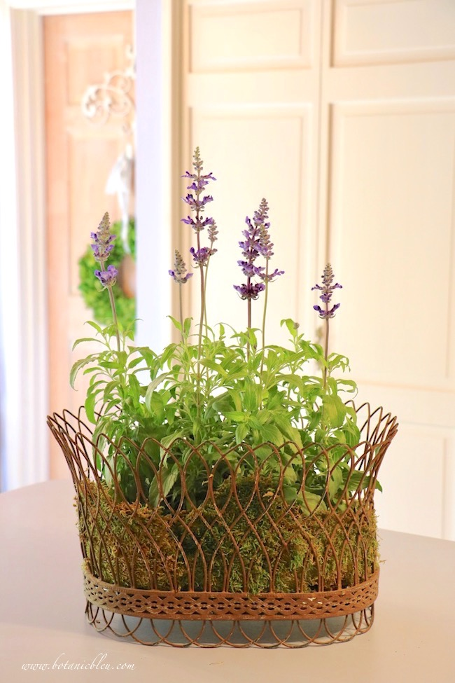 French Wire Basket With Blue Sage and Moss