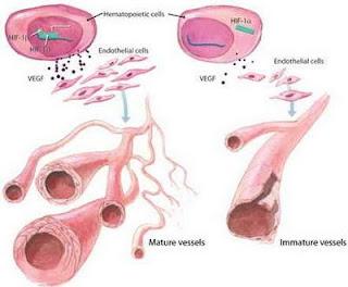 Obat Alami Penyakit Gonore