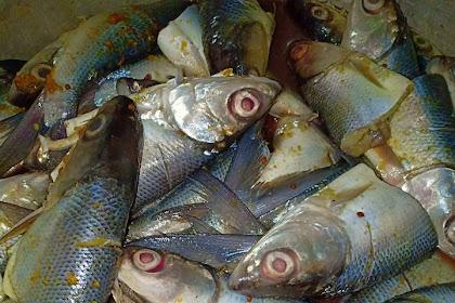 Cara Goreng Ikan Agar Minyak Tidak meletup-letup