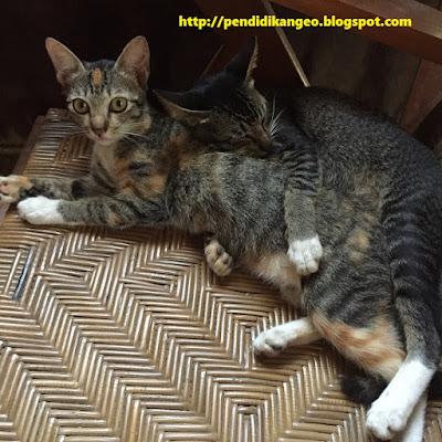 Sebaran Fauna di Indonesia