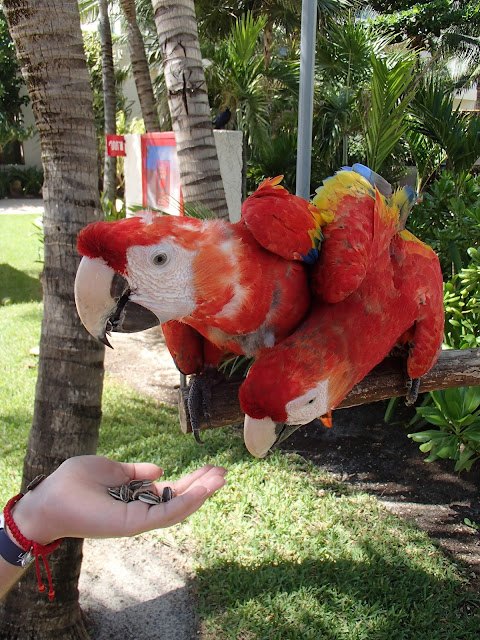 feeding the macaws