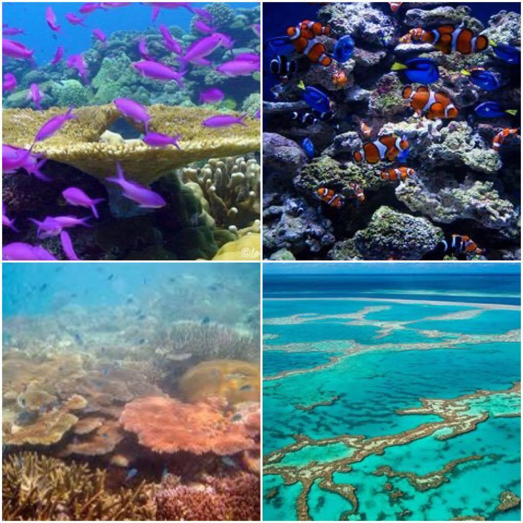 L oreal color riche hookup coral