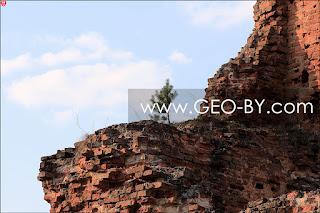 Новоспасск. Сосна на руинах костела XVIII века