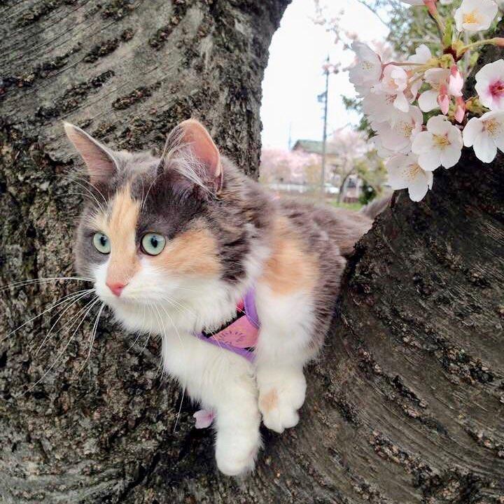 Kucing di pohon