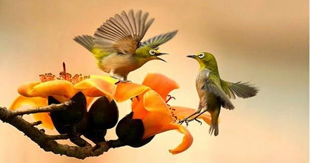 Video Burung Pleci Gacor  bfde67e7b3