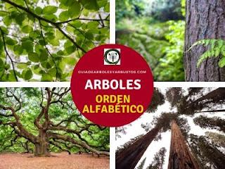 Nombre de árboles por orden alfabético