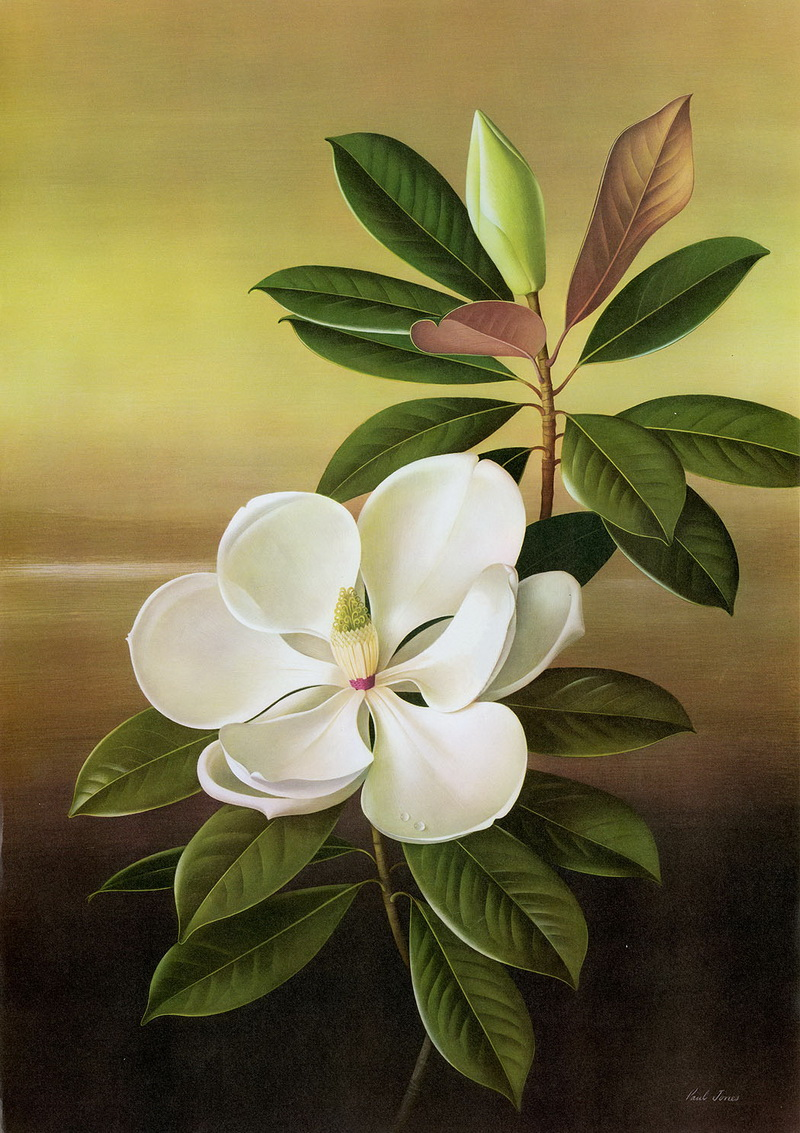 Paul Jones 1921-1997 ~ pintor australiano | Flores de Mayo