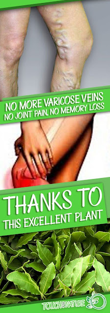 No More Varicose Veins, No Joint Pain, No Memory Loss, Or Headaches! Thanks To This Plant, Know it!!