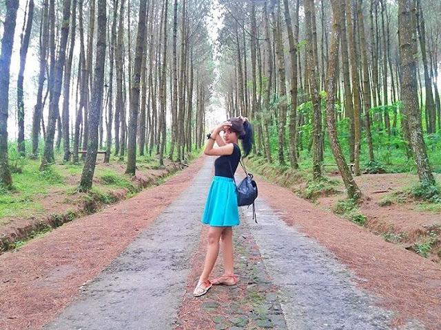 foto hutan pinus kragilan
